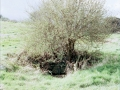 1998 March Holy Well with Budding Elder