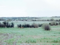 Holy Well and Standing Stone Field View1998
